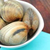 Carpetshell clams (ruditapes decussatus)
